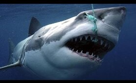 Sharks : Scavengers of the Seas - Documentary