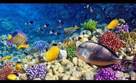 Breathtaking Dive in Raja Ampat, West Papua, Indonesia Coral Reef, Into the Ocean & Under the Sea