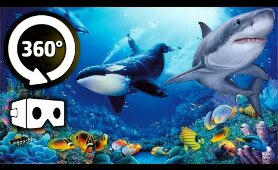 VR 360 Video - Secret Underwater World 3D - Virtual Reality 4K