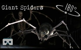 Scary VR video with Giant Spiders & Horror Monsters: Virtual Reality Halloween 3D videos for VR Box
