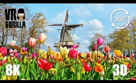 This is Holland VR: Keukenhof Flower 'Garden of Europe' - 8K 360 3D Video