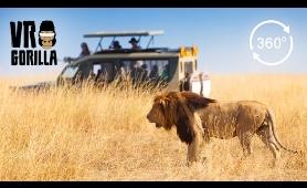 Guided Safari In Queen Elizabeth Park, Uganda - 360 VR Video