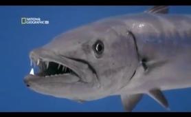 World's Deadliest Animals in The Deep Ocean - National Geographic